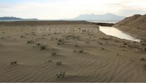 Dunes embrionàries. Xesca Serra