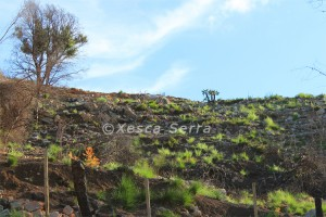 Incendi a Mortitxet - agost 2012. Foto: Xesca Serra